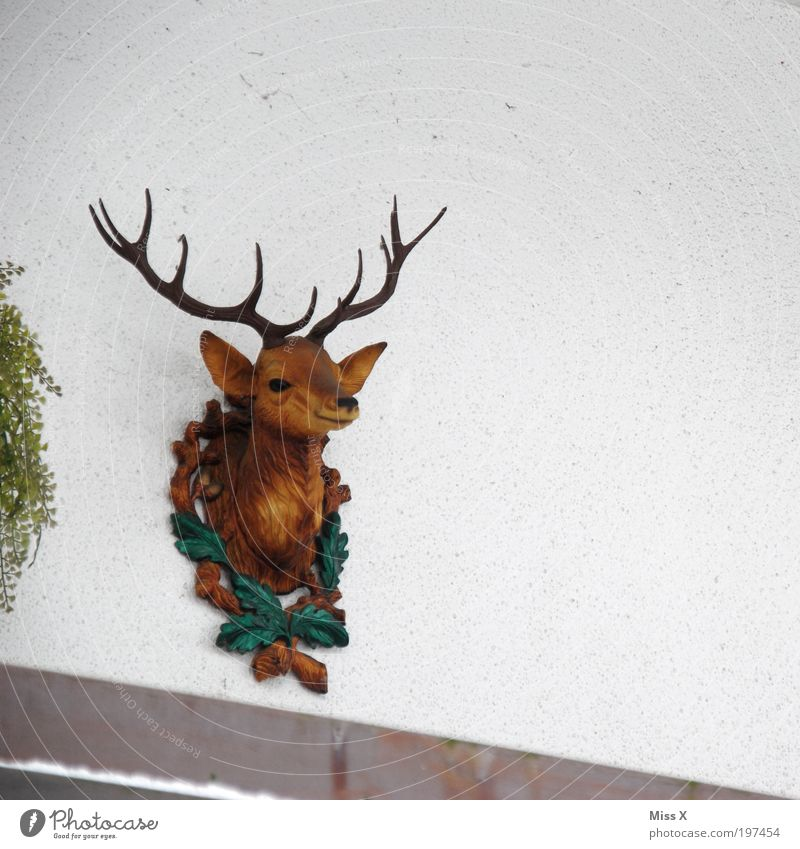 Animal Wall (building) Head Wall (barrier) Flat (apartment) Facade Lifestyle Kitsch Decoration Living or residing Plastic Hip & trendy Deer Building Knick-knack