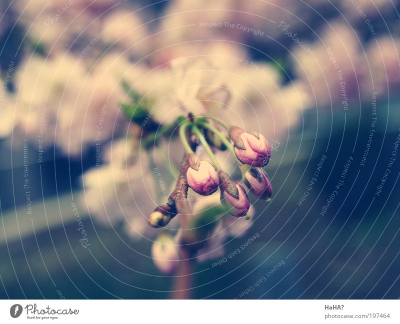 Nature Tree Flower Green Blue Plant Leaf Yellow Blossom Spring Gray Pink New Fragrance Beautiful weather Weather
