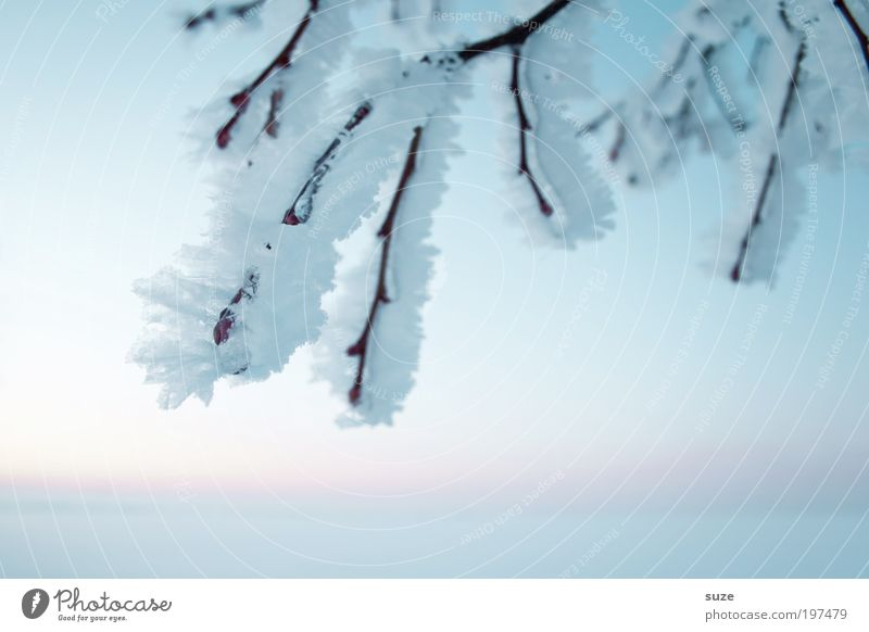 Sky Nature White Plant Loneliness Winter Landscape Environment Cold Snow Emotions Bright Horizon Ice Natural Authentic