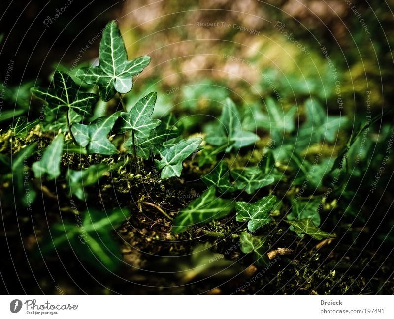 greenlings Environment Nature Plant Earth Spring Leaf Foliage plant Wild plant Park Virgin forest Green Colour photo Exterior shot Day Light Shadow Contrast
