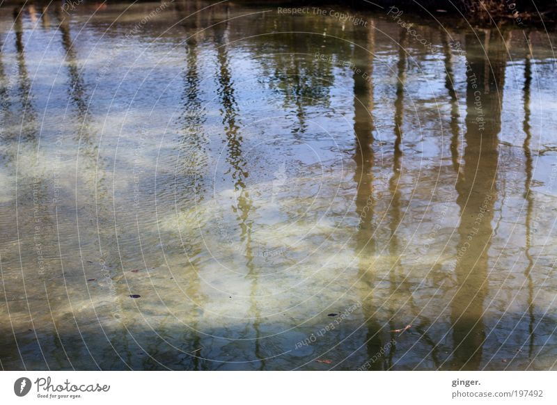 Nature Blue Water Tree Movement Gray Line Brown Waves Beautiful weather Soft Tilt Copy Space Tree trunk Pond Surface of water