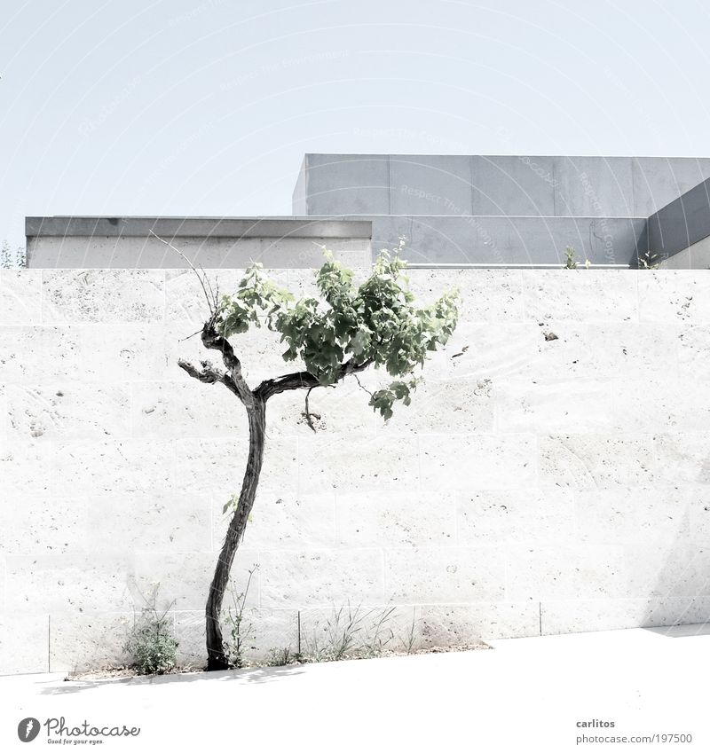 White Tree Blue Summer Wall (building) Wall (barrier) Contentment Bright Metal Architecture Esthetic Roof Clean Border Sidewalk