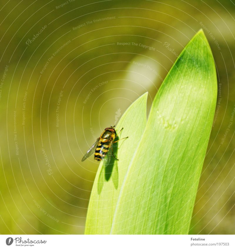 Nature Plant Summer Leaf Black Animal Yellow Spring Park Warmth Bright Fly Weather Environment Break Climate