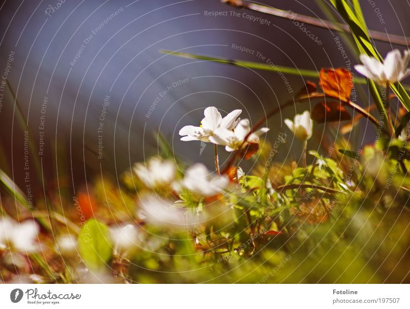 Nature White Flower Green Plant Leaf Meadow Blossom Grass Spring Park Warmth Landscape Bright Weather Environment