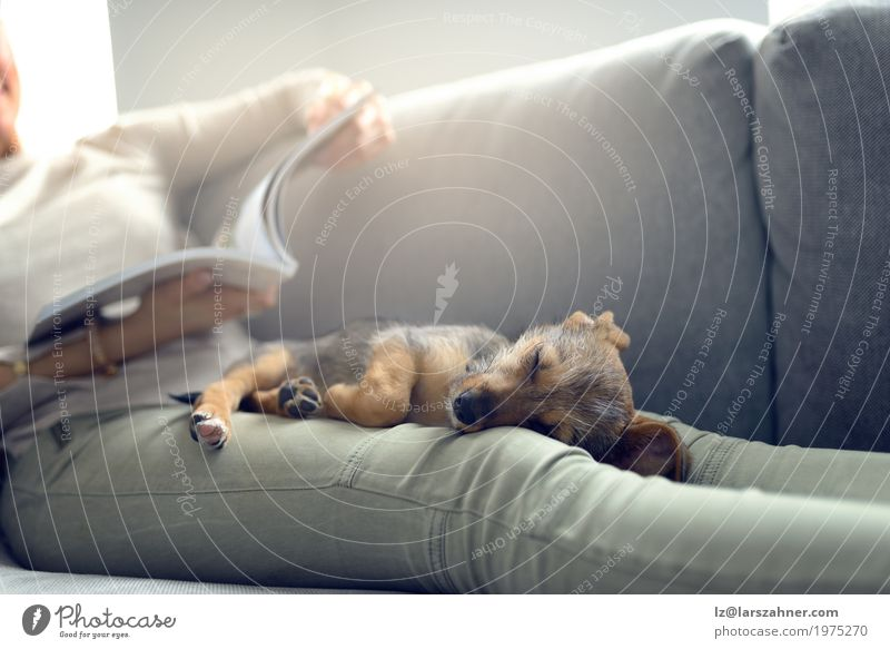 Puppy sleeping on owner laps Relaxation Calm Reading Sofa Living room Woman Adults Animal Pet Dog Paper Sleep Safety (feeling of) closeness Copy Space Couch
