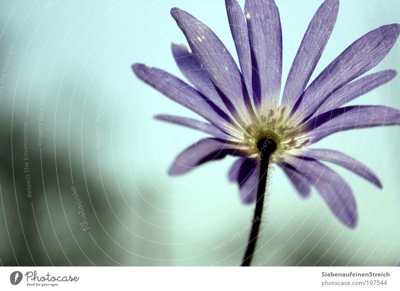 Nature White Flower Blue Plant Calm Blossom Spring Freedom Air Elegant Perspective Esthetic Growth Romance Near