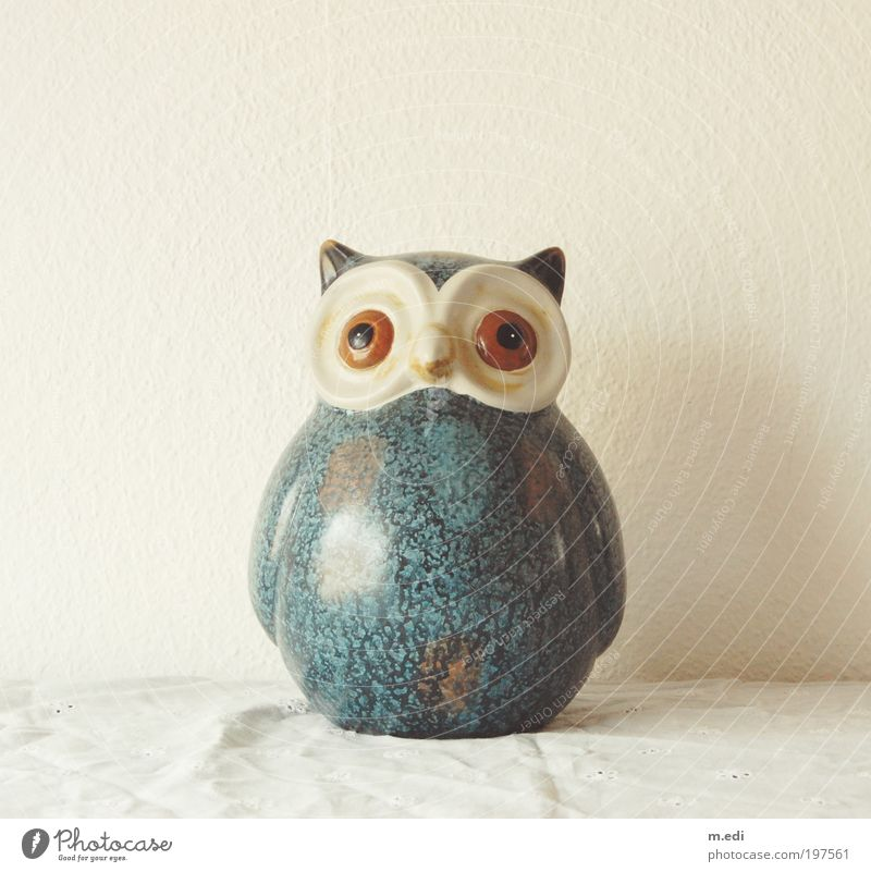 the UHU Bird Owl birds Kitsch Odds and ends Collector's item Knick-knack Decoration Stand Colour photo Day Central perspective