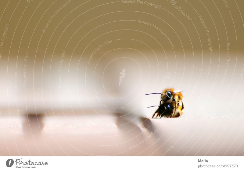 Nature Joy Animal Environment Emotions Moody Together Natural Bee Passion Sympathy Spring fever Insect 2