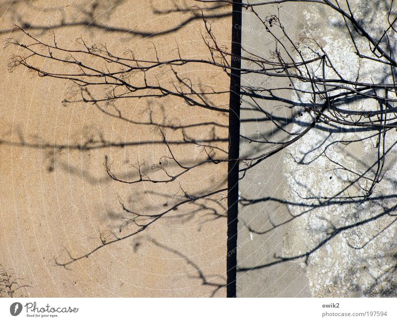 lifelines Nature Plant Tree Branch Twig House (Residential Structure) Manmade structures Building Architecture Wall (barrier) Wall (building) Facade Old Growth