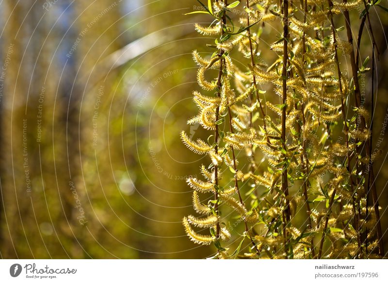 Nature Tree Flower Plant Yellow Spring Wood Park Brown Weather Environment Gold Happiness Esthetic Bushes Climate