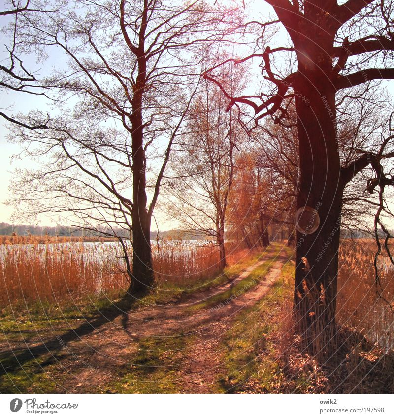 signposts Environment Nature Landscape Plant Earth Water Cloudless sky Horizon Spring Beautiful weather Warmth Tree Grass Bushes Branchage Lakeside Pond