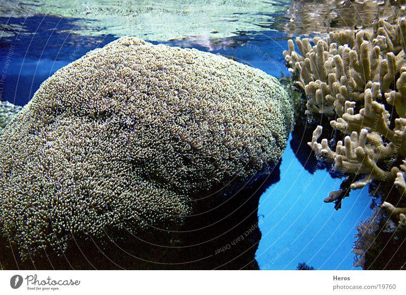 corals Coral Ocean Water underwater landscape