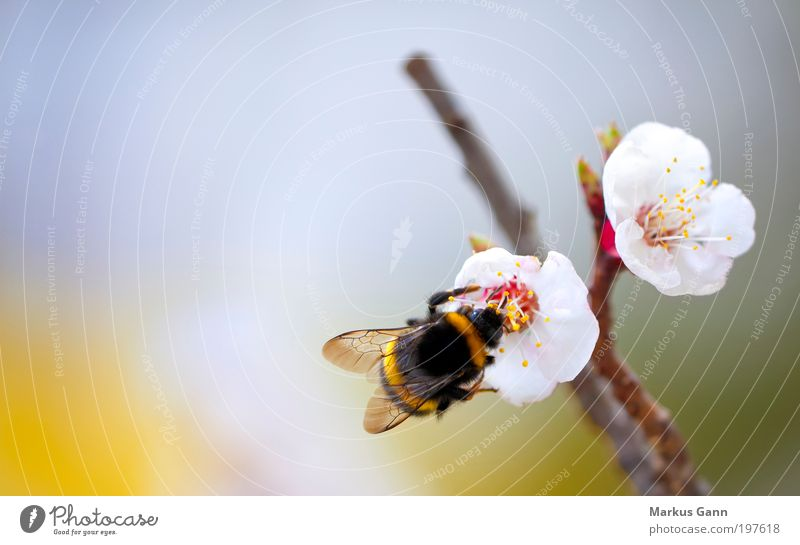 Nature White Plant Summer Black Loneliness Yellow Life Jump Blossom Spring Orange Small Wing Insect Branch