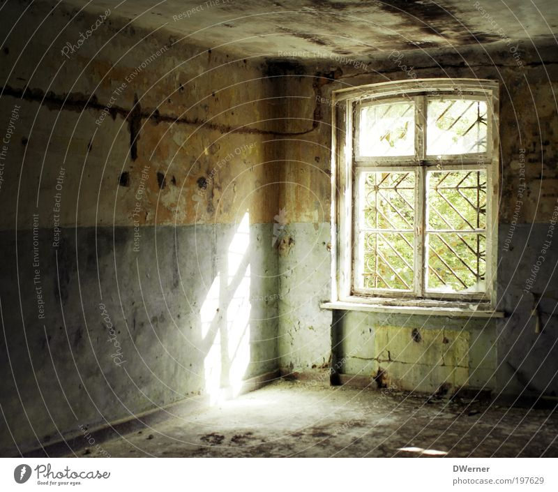 Nature Old Plant Summer House (Residential Structure) Cold Dark Wall (building) Window Environment Architecture Stone Wall (barrier) Dye Fear