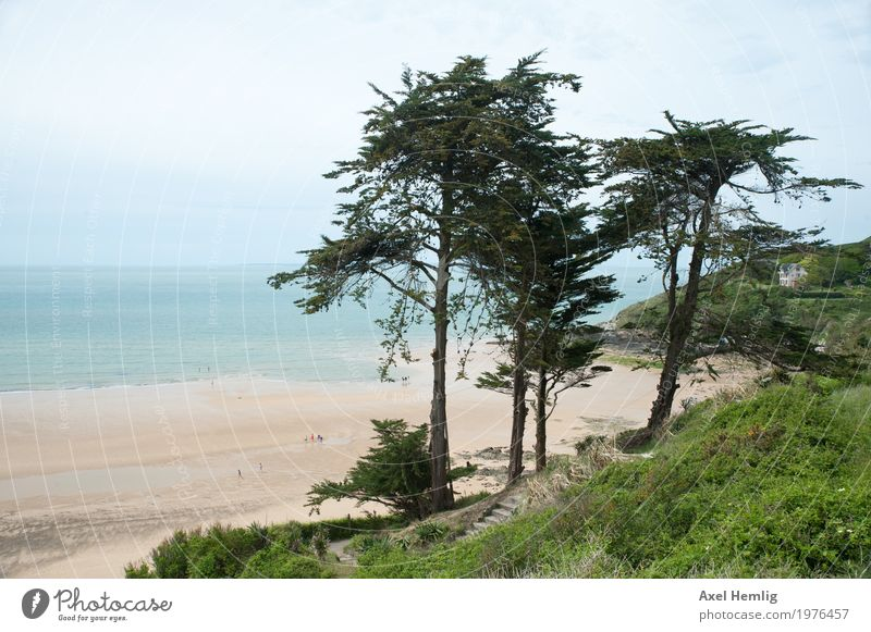 Enchanted Normandy Coast Landscape Spring Beautiful weather Tree Beach Ocean English Channel France Relaxation Maritime Green Turquoise Calm Wanderlust