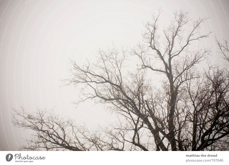 Sky Nature Old Tree Plant Winter Clouds Environment Landscape Dark Death Cold Snow Field Climate Fog