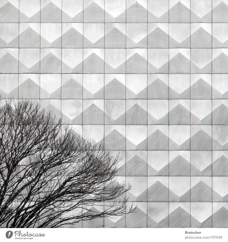 Tree Calm Architecture Gray Style Sadness Metal Art Facade Design Modern Serene Society Idea Boredom