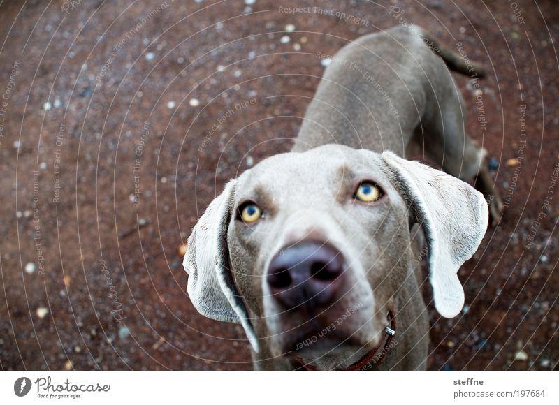 Büüüüüüüttee!!! Animal Pet Dog 1 Beautiful Love of animals Beg Plead Beseeching Alluring persuasiveness Colour photo Animal portrait
