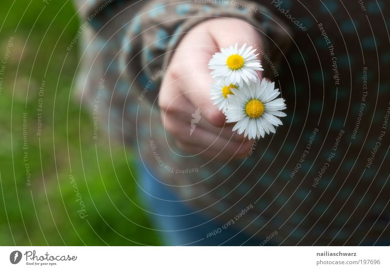 daisies Happy Human being Feminine Child Girl Infancy Hand Fingers 1 3 - 8 years Environment Nature Plant Flower Daisy Esthetic Cute Positive Yellow Pink White