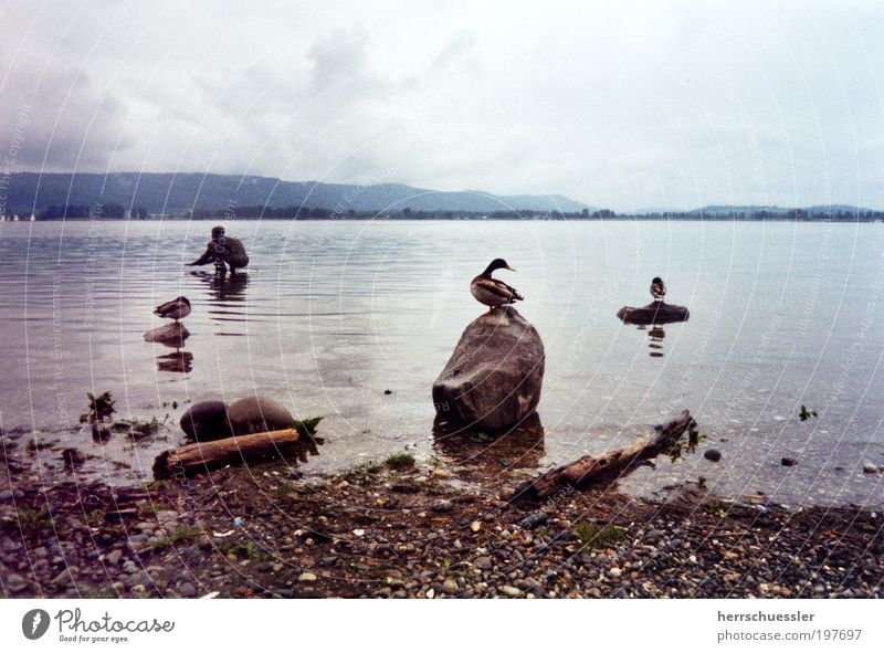Escape from Duckburg Landscape Water Clouds Horizon Bad weather Lakeside Lake Constance Statue Animal Wing 3 Calm Loneliness Surrealism Stone Subdued colour