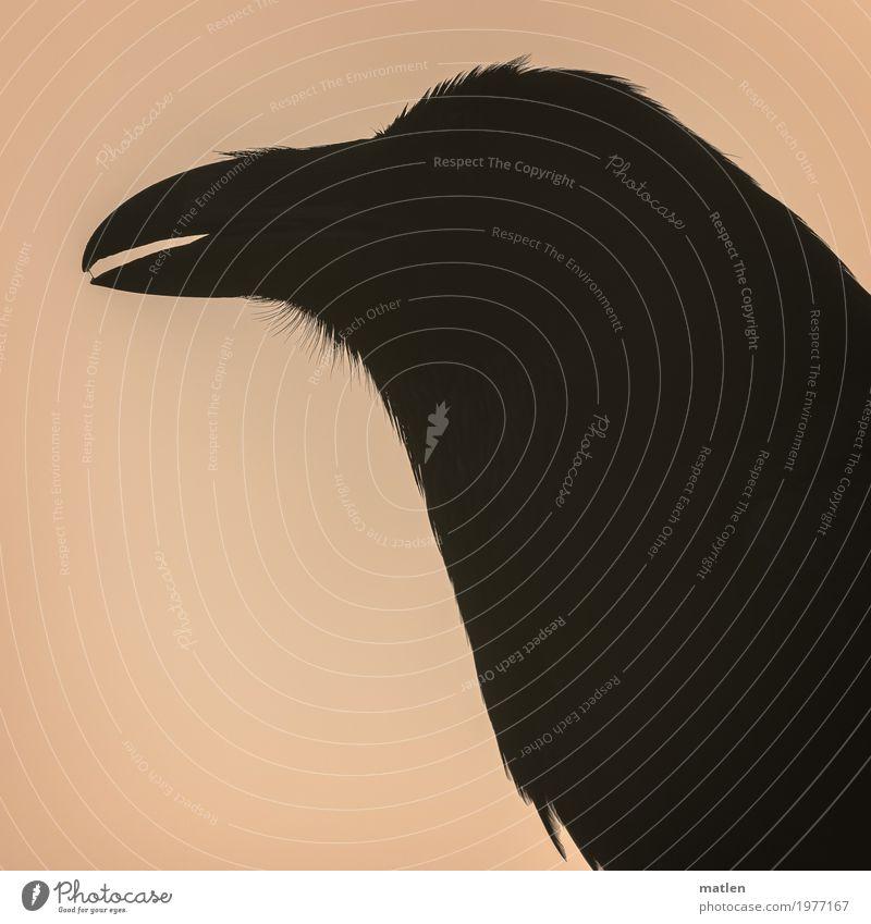 spit away Animal Bird Animal face 1 Dark Pink Black Raven birds Beak half-open Saliva Metal coil Colour photo Subdued colour Exterior shot Detail Pattern