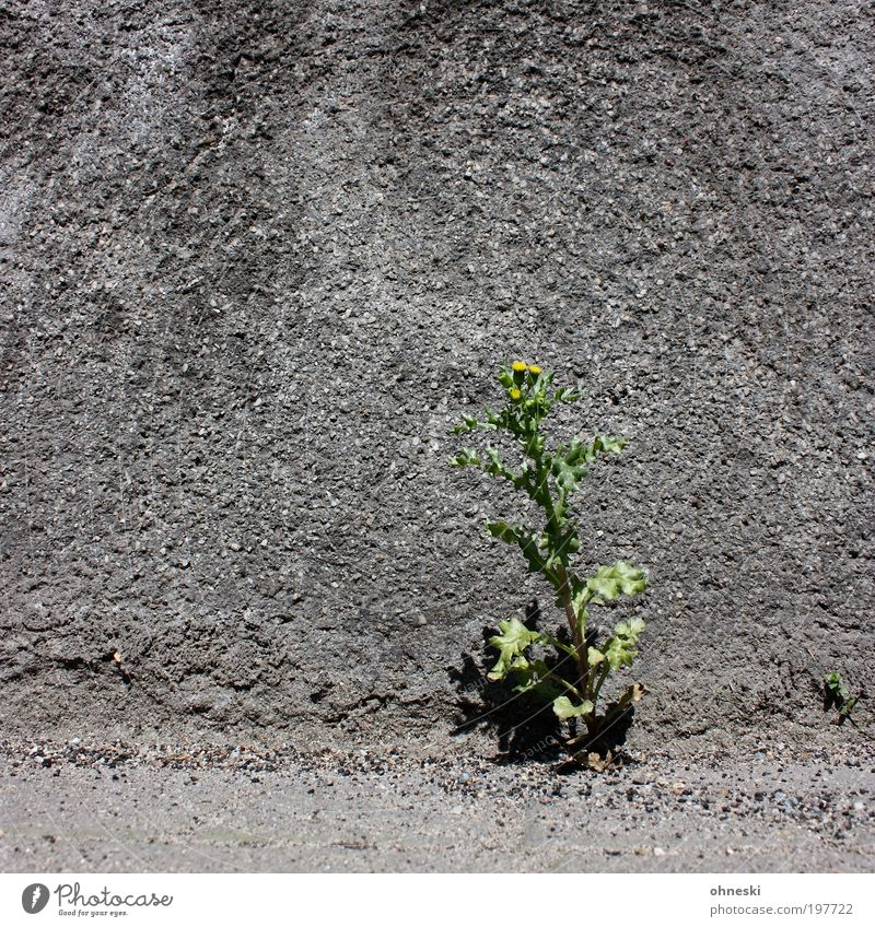 Nature Plant Flower House (Residential Structure) Life Wall (building) Environment Gray Grass Blossom Wall (barrier) Spring Earth Facade Growth Hope
