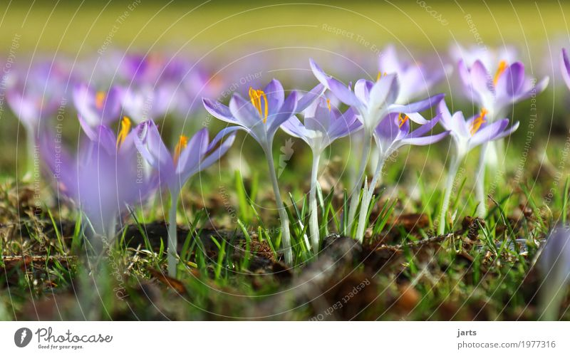 spring in park IV Nature Plant Spring Beautiful weather Flower Grass Blossom Wild plant Park Blossoming Growth Fragrance Fresh Natural Violet Spring fever