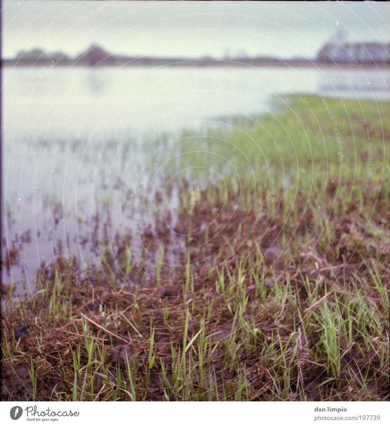 the Elbe Environment Nature Landscape Spring Climate change Bad weather Grass Foliage plant Meadow River bank Heinrichsberg Deserted Green Calm Medium format