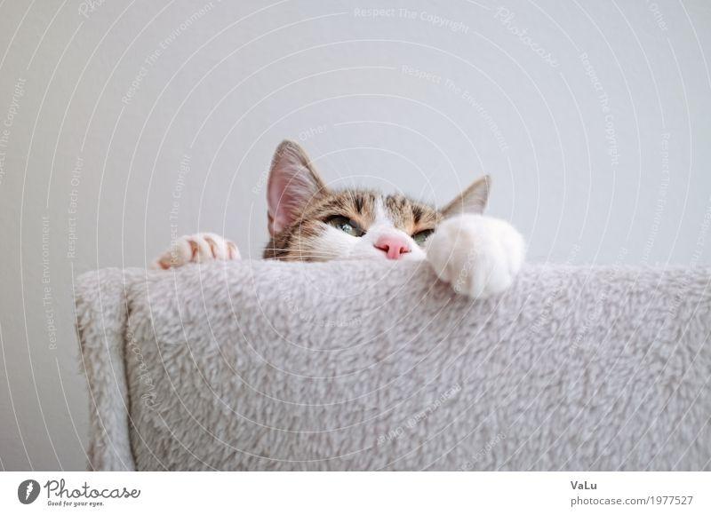 """<font color=""""#ffff00"""">-=Someone´s=- sync:ßÇÈâÈâ Pet Cat Pelt Paw 1 Animal Gray White Contentment Colour photo Interior shot Copy Space top Worm's-eye view"""