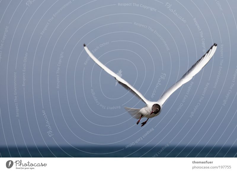 White Ocean Blue Vacation & Travel Animal Movement Freedom Bird Elegant Flying Fresh Happiness Joie de vivre (Vitality) Curiosity Beautiful weather Seagull