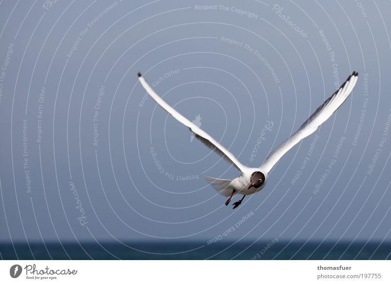 White Ocean Blue Vacation & Travel Animal Movement Freedom Bird Elegant Flying Fresh Happiness Joie de vivre (Vitality) Curiosity Beautiful weather Seagull