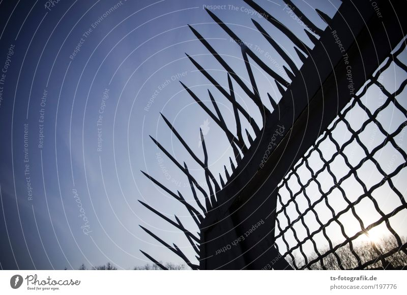 Iroquois garden fence Sky Cloudless sky Sun Plant Tree Fence Grating Mesh grid steel gate steel fence Point Barbed wire fence Thorny Spine Metal Rust Net Lock