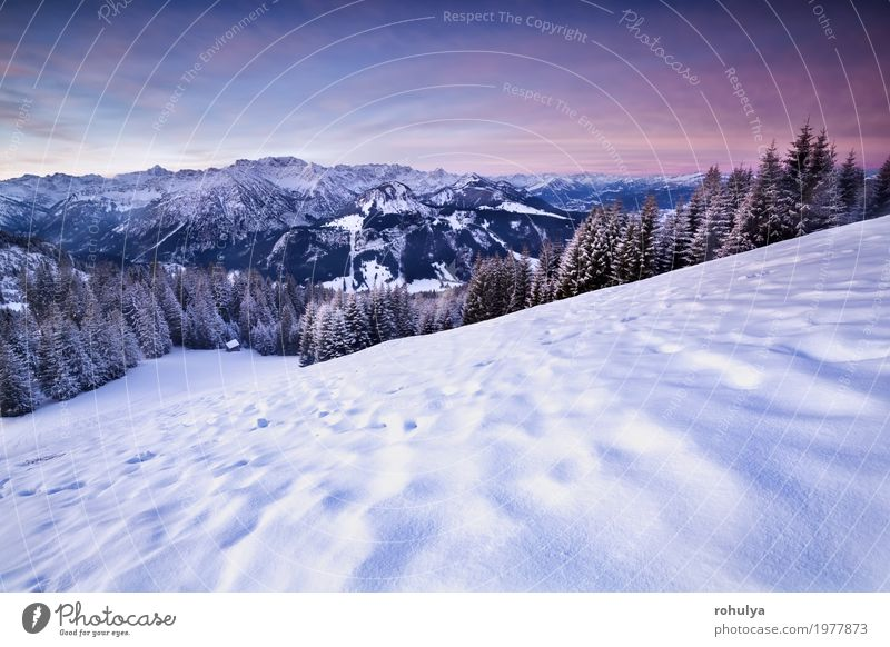 pink sunrise in winter Alps Sky Nature Vacation & Travel Blue Tree Landscape Winter Forest Mountain Snow Germany Rock Pink Vantage point Europe Hill