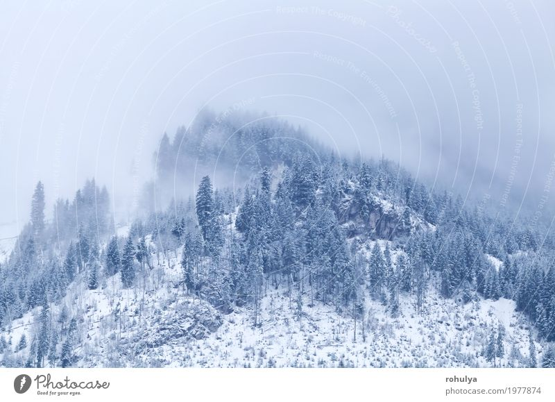 mountain top in winter covered with fog Winter Snow Mountain Nature Landscape Clouds Weather Fog Forest Hill Alps Peak Wild White Serene Alpine Spruce Pine
