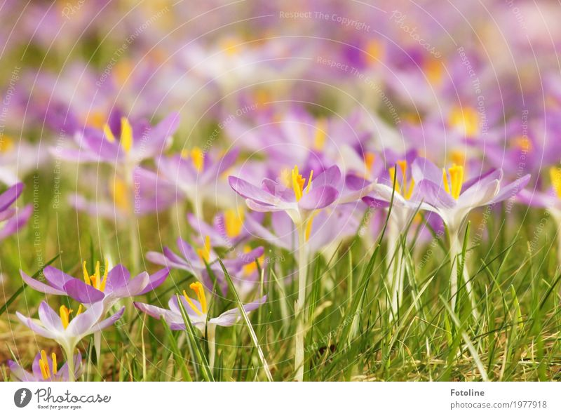 flowerage Environment Nature Plant Spring Beautiful weather Flower Blossom Garden Park Meadow Bright Near Natural Warmth Yellow Green Violet