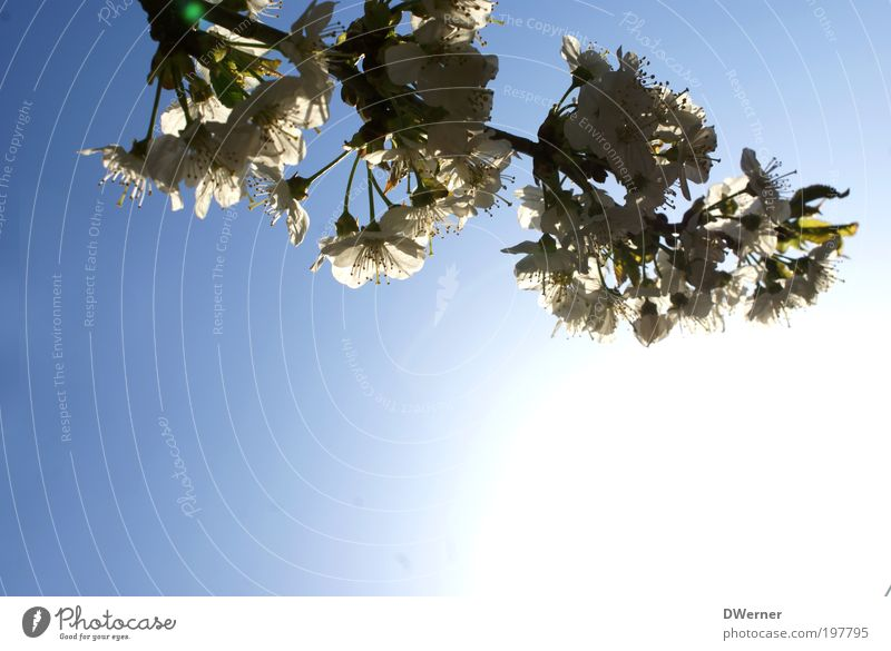 Sky Blue Beautiful Tree Plant Sun Environment Spring Blossom Style Air Park Climate Wild Growth Esthetic