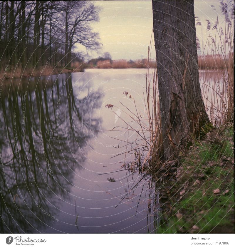 on the lakeshore Environment Nature Landscape Water Bad weather Tree Grass Common Reed Forest Pond Lake Brown Idyll Medium format Analog Nature reserve Edge