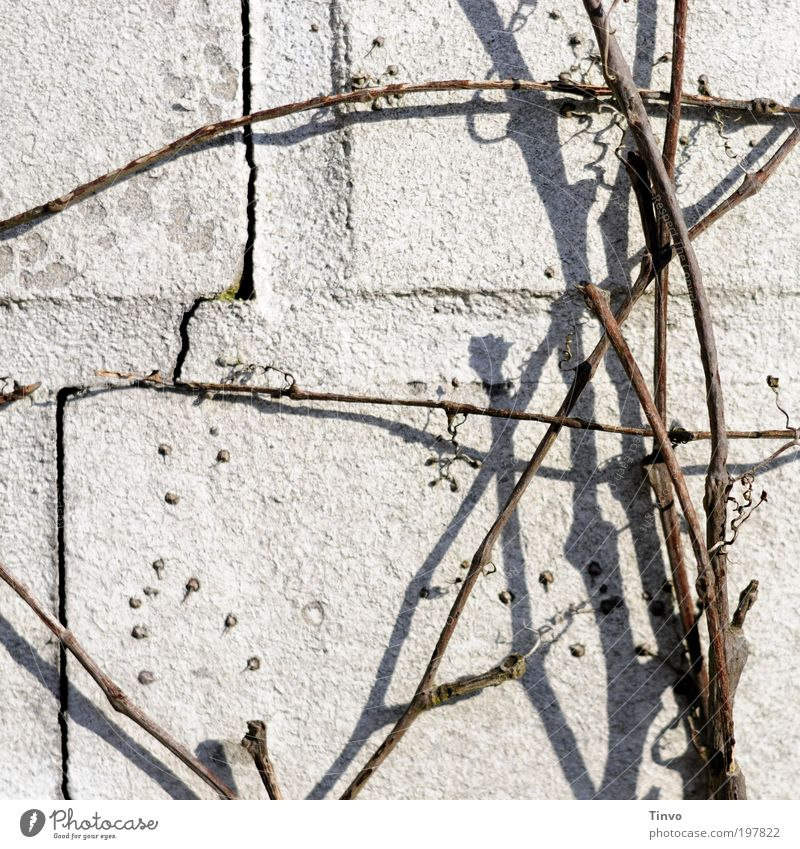 Nature Plant Winter Wall (building) Autumn Wall (barrier) Bright Facade Thin Beautiful weather Chaos Crack & Rip & Tear Muddled Twig Seam Creeper