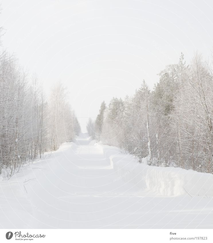 Sky Nature White Tree Plant Vacation & Travel Winter Far-off places Street Cold Snow Freedom Lanes & trails Bright Ice Going