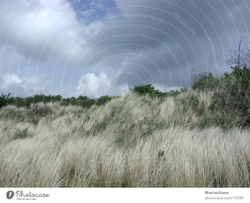 Wild growth in the dunes Bushes Beach Netherlands Sand uncultivated