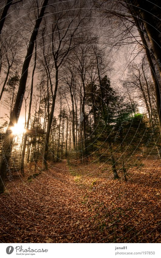 autumn forest Trip Sun Environment Nature Landscape Plant Earth Sunrise Sunset Sunlight Autumn Beautiful weather Tree Wild plant Forest Switzerland Deserted