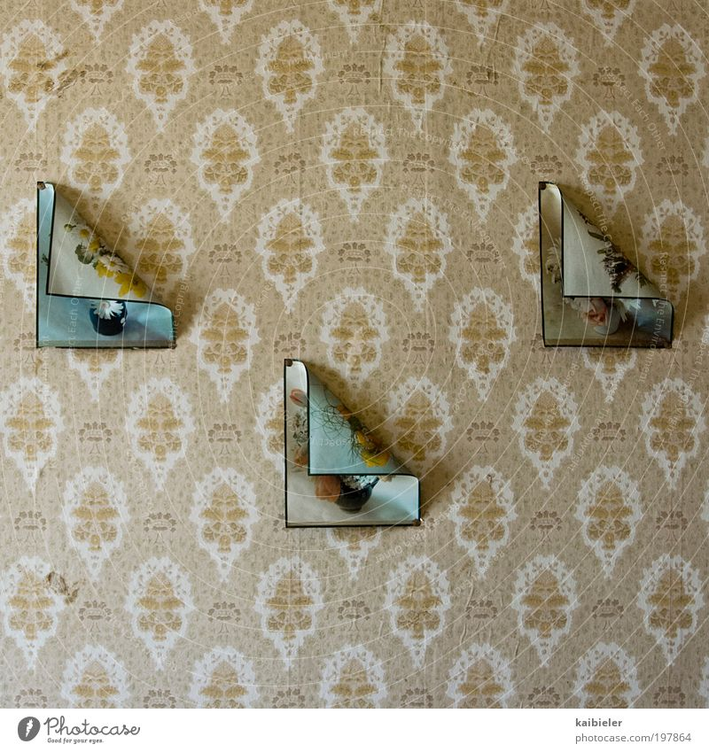 Old Flower Yellow Wall (building) Wall (barrier) Brown Art Flat (apartment) Design Esthetic Retro Kitsch Decoration Image Living or residing Transience