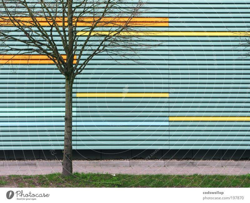 Nature Tree Green Blue City Loneliness Yellow Wall (building) Grass Garden Wall (barrier) Architecture Facade Uniqueness Sidewalk
