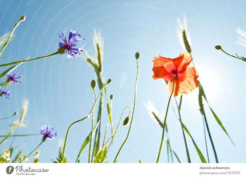 Nature Sky Sun Flower Blue Plant Red Summer Blossom Grass Spring Weather Environment Climate Meadow Beautiful weather