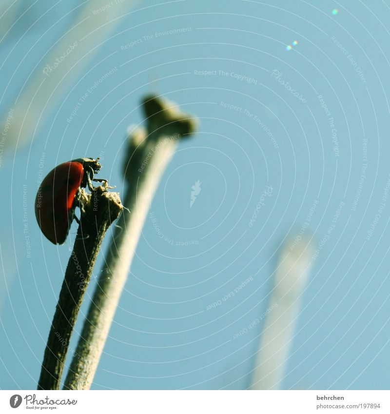 Sky Blue Red Summer Calm Animal Spring Contentment Power Hope Wing Observe Brave Blade of grass Beautiful weather Ladybird