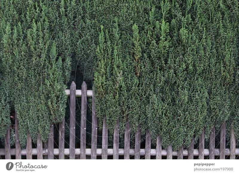 fence Plant Foliage plant Agricultural crop Garden Wood Growth Brown Green Contentment Power Nature grow together Attachment Multicoloured Exterior shot Pattern