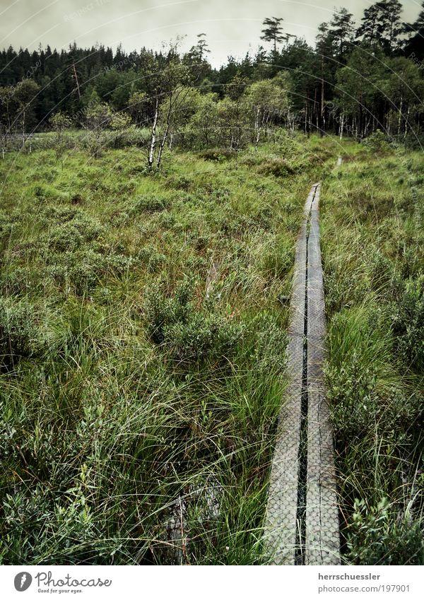 Nature Green Plant Loneliness Forest Dark Landscape Grass Lanes & trails Contentment Horizon Trip Perspective Bushes Threat Target