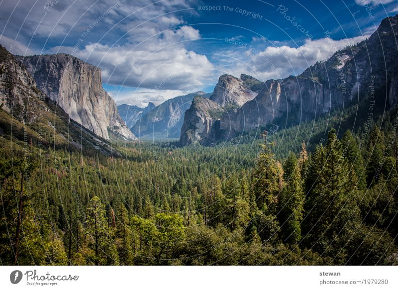 Yosemite National Park Nature Landscape Forest Rock Mountain Longing Loneliness Adventure Relaxation Vacation & Travel Colour photo Exterior shot Deserted Day