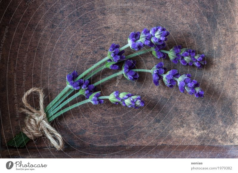 bouquet of lavender Herbs and spices Lavender Nutrition Organic produce Beautiful Relaxation Summer Blossom Lavande harvest Bouquet Bow Wood Fragrance Brown