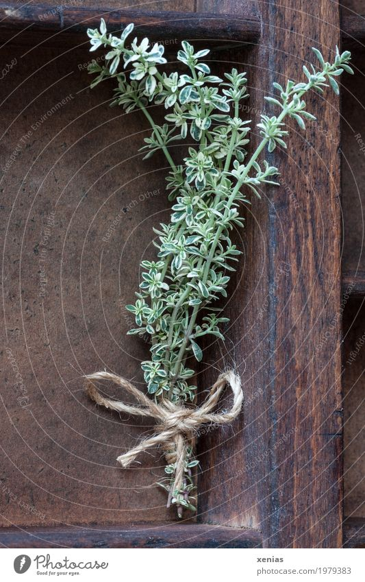 fresh lemon thyme Herbs and spices Thyme Nutrition Healthy Shelves Plant Bow Fragrance Brown Green Spicy Sense of taste String Supply Colour photo Interior shot